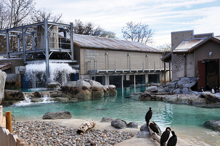 Maryland Zoo Penguin Exhibit